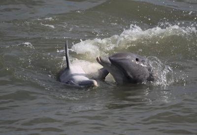 Flipper Finders Llc Folly Beach Sc